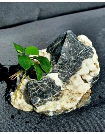 Roca aman [landscape] with anubia 10-15cm 500g