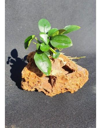 Rocha Marble com anúbia 10-12cm 500g