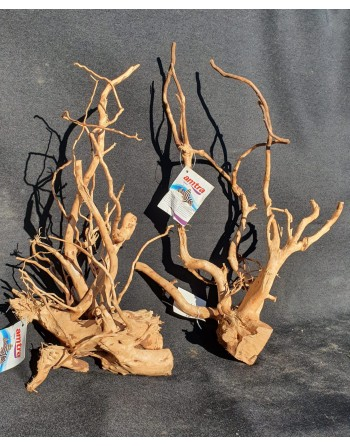 Red root 40 to 45 cm 2 pieces [you can choose a piece]