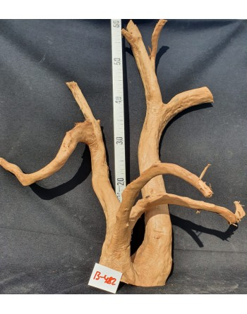 Red Root 55 to 65 cm