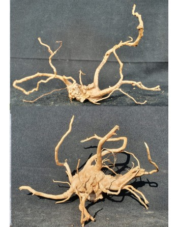 Red Root 20 to 30 cm 2 pieces [you can choose a piece]