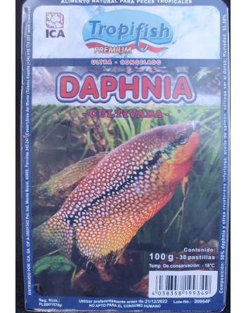 Daphnia congelada blister de 100 gr - 30 pastillas