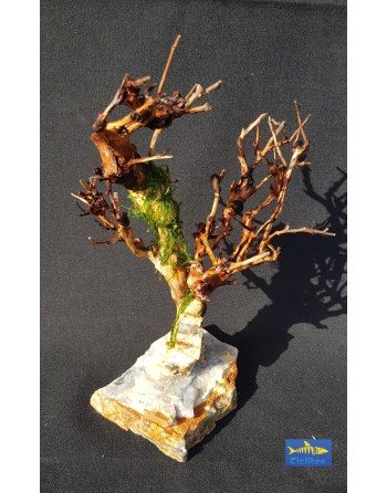 Bonsái madera natural en roca con musgo modelo 2