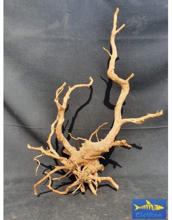 Red Root de 60 a 80 cm - 2 a 2,5 kg