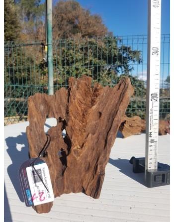 Tronco mopani o manglar 10 a 20 cm