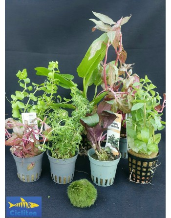 lote variado 8 plantas