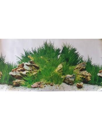 Fondo para acuario MOD Laguna Blanca altura 50 cm 3,30€...