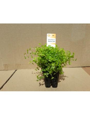 Upholstery plant montecarlo