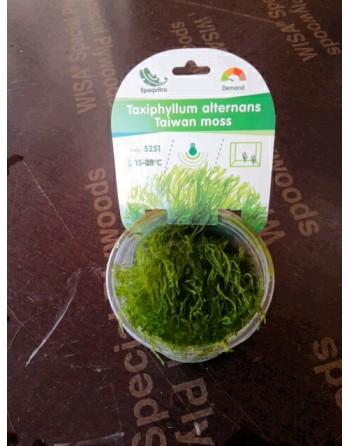 Musgo de java tarrina libres de bacterias 100 ml