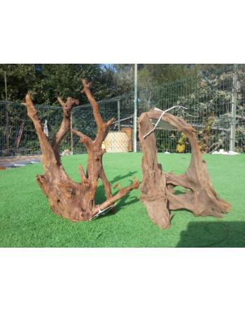 Oferta tronco manglar 30-40 cm 2 unidades 30 €