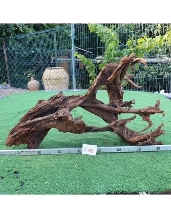 Mangrove trunk 70 to 90 cm