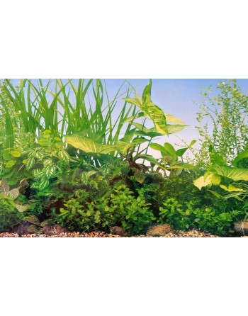 Background for aquarium MOD Pond height 50cm 3,30€ meter