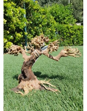 Ramos de bonsai de madeira natural separados 23 x12 x 15 cm