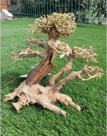 Natural wood bonsai 24 x 16 x 20 cm