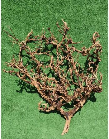 Ramos de aquário thailand tree 30 a 40 cm
