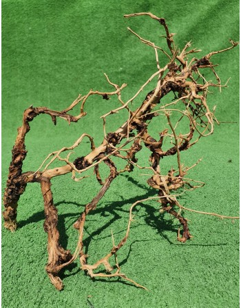 Aquarium branches thailand tree 20 to 30 cm