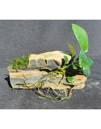Thousand Layers Rock with anubia and moss 15-20cm 1,5kg